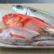 「のどぐろ」「はたはた」など「カニ」以外にも、熊本県ではなかなか口にすることのできない北陸産の食材をメインに使用。生の状態で仕入れております。