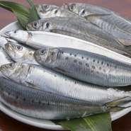 鮨ネタは旬が命。四季に合わせて移り変わっていく旬のネタを、いつでも豊富に取り揃えております。魚好きの方がよく好まれる『光物』も、仕入れに力を入れています。