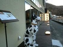 早川側玄関では「デカワンコ」がお出迎え!