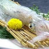 呼子や玄界灘で採れた魚介が手頃な料金で味わえます。