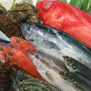季節によって『真鯛』『もちカツオ』『はも』『天然とらふぐ』などが捕れる、遠州灘は全国有数の漁場です。
