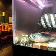 吟味した天然の魚料理を中心に海老・貝・蟹などその季節、その日のとっておきを味わってください。