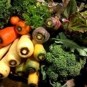 生産者の挑戦で生まれる洋野菜によって、新しい料理へと導かれる
