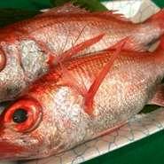 最近マスコミで取り上げられる有名な魚。芸能人にもファンが多いです。めちゃくちゃ旨いです。塩焼が絶品!