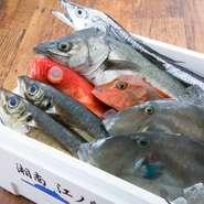 刺身にした時にきっちりとカドが立つ白身の魚や濃厚な赤身の魚、しっかりと身が詰まった貝類など、選りすぐりの魚介を仕入れています。獲れたて新鮮な魚介は、食感も旨味も異なります。