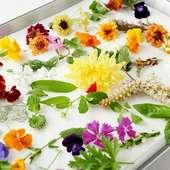 デザートに使う花々は、日本各地の里山から摘まれて届けられます