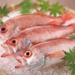市場直送の鮮魚盛り合わせ