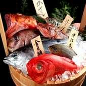 豊洲直送鮮魚