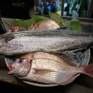 3~4月が旬の美味しいお魚