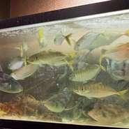 生簀の魚を見に来てください!