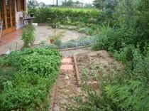 お店の庭には自家製ハーブも栽培しています。