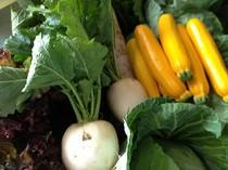 おかめ鮨では根津農場さんの有機野菜を使用しております。