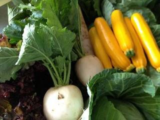 根津農場さんの有機野菜
