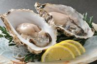 函館と言ったら活いか! 水槽には常時活いかが泳いでいます。活いかを食べるなら海光房へ。