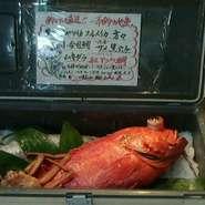 定番的な高級魚のひとつ、紅あこう鯛が入荷しました。