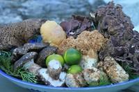 店主自ら山に入り採ってくる香り高い山菜料理を是非食べて下さい!! ※4月末~6月上旬