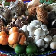 きのこ採りの好きな肴店主が自然豊かな飛騨の奥山で採ってくる天然きのこは豊富な種類で美味しい! そんなきのこを炭火で焼き食べる秋の最高の贅沢! 感動の美味しさです!
