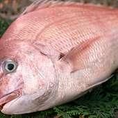 いけすの魚もさることながら、やはり一番のおすすめは天然魚