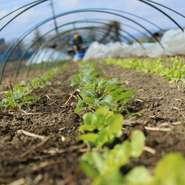 野菜は市場の他、地元の農家から、化学肥料を使わずに育てられた甘味のある自然栽培野菜を、直接買い付け。畑にも足を運び、農園さんのお手伝いをすることで食材とより向き合っております。