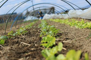 地元農家から直接仕入れる新鮮な自然栽培野菜