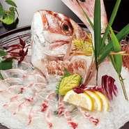 ざうおを代表する魚。ざうおに来たら鯛を釣らな!   4,180円(税込)→釣ると3,245円(税込)