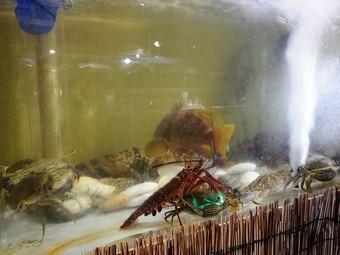 大人の中華レストラン。ぴちぴちの鮮魚が中華料理で楽しめます。