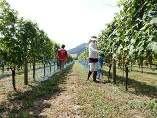 土壌やその年の気候まで、自然そのままを表現するワインを