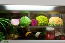 季節ごとの珍しい野菜もふんだんに取り入れた料理