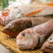 玄界灘などの漁港から直接買い付けしているので、普通に東京にこない珍しい白身魚なども入ります。「新しい魚の美味しさとの出会い」を多くの人にお届けします!