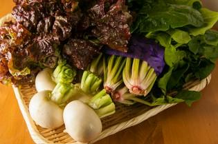 朝採れの新鮮野菜が料理のインスピレーション