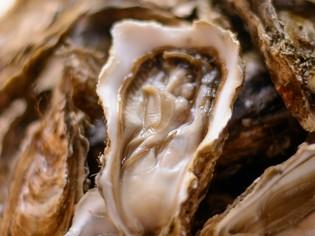 仙鳳趾の漁師から直送される「仙鳳趾産 牡蠣」