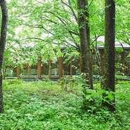 窓の外に広がるのは、軽井沢らしい木立が立ち込める森です。ホテルの敷地内ながら、離れのつくりになっており、周囲の喧騒とは無縁の空間が広がります。食後の散策もおすすめです。