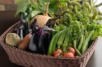 内田さんの畑の自家製朝採れ野菜