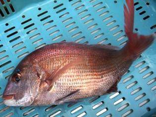 地元・明石の海を知り尽くした漁師が厳選した鮮度抜群の魚介