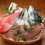 全ての鮮魚は、その日の朝のとれたてを直送で仕入れています。和歌山の辰が浜から届いた新鮮な刺身。お皿にもこだわって、氷を敷き詰めて鮮度を保ちながら運ばれます。釜揚げしらすは適度な塩加減で絶品です。