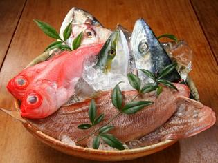 その日に揚がったばかりの、新鮮な魚をご用意しています