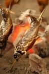 【忘年会・新年会をお考えの幹事様必見!】やっぱり目玉は方舟名物→「新潟県 南魚沼産 岩魚の天然塩焼き」