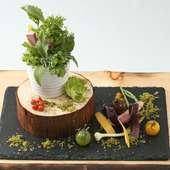 『鉢植え 大和田農園直送有機野菜 オリーブを土に見立てて 数種類ハーブのヴィネグレット』