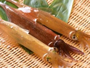 特徴の異なるヤリイカと真イカが季節替わりで味わえる