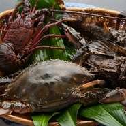 大阪湾や和歌山湾から直送される、とれたての新鮮な魚介類。捌く直前までいけすの中を泳がせることによって、抜群の鮮度が料理の中でも力強い存在感を放ちます。