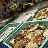 大きないけすから選んだ鮮度抜群の魚介をお好みの調理法で