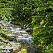 自然を身近に感じるには最適な花背地区。【美山荘】の脇には、桂川の源流が流れ、春の山桜、秋の紅葉、冬の雪景色と、四季折々の自然を堪能するには、お昼の利用がおすすめです。