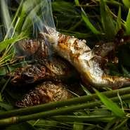 目の前を流れる桂川の上流。そこで獲れた鮎は、美山荘にとっては夏の風物詩とも言える欠かせないご馳走です。その調理の一つひとつに、この地に由来する素材へのこだわりが、受け継がれています。
