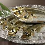 目前に駿河湾が広がる沼津市。沼津港から毎日仕入れる新鮮な魚は、旬を感じるものを中心にベテラン料理人の目利きで仕入れ。アジをはじめ、季節によっては黒むつ、アカハタなどの刺身も堪能できますよ。