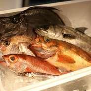 なんといっても、日本海の鮮魚には自信あり。「地魚を守る、活かす、伝えることができるのは、食から」という考えに基づいて、旬の魚介を厳選し、その魅力を余すところなく伝えています。
