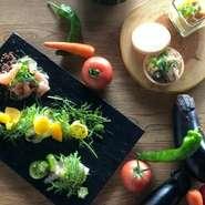 鮮やかに食卓を彩る前菜の盛り合わせ