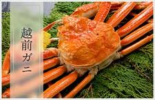 専属バイヤーが目利きをし、厳選した日本海タグ付蟹のみ使用。 圧倒的な旬蟹の味わいを是非、ご堪能下さい