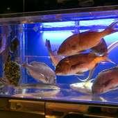 九州のお魚やお野菜を使用している