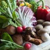 ヨーロッパ野菜など、食べた事のない珍しい野菜を多数ご用意