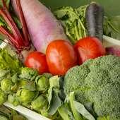 旬の食材の旨みを追求した調理法でオーガニック野菜を堪能